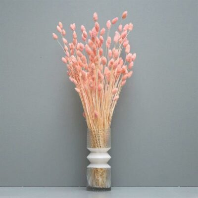 Phalaris, light pink