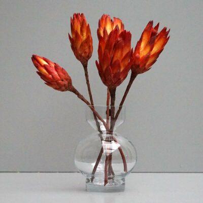 Protea, rød. 5 stk.