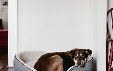 dog-bed-867x508